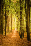 Beautiful spring forest Royalty Free Stock Photo