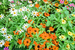 Beautiful spring garden multi color flower. Beautiful spring garden multi color flower background Stock Photography
