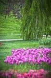 Beautiful spring garden stock images