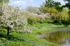 Beautiful spring garden and pond Royalty Free Stock Photos