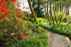 Beautiful Spring garden with red azalea tree Royalty Free Stock Image