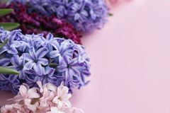 Beautiful spring hyacinth flowers on color background. Closeup. Space for text stock image