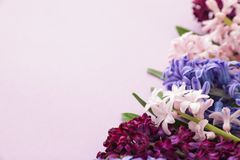 Beautiful spring hyacinth flowers on color background, closeup. Space for text royalty free stock images
