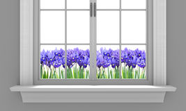 Beautiful spring irises flowering outside a house window Stock Image