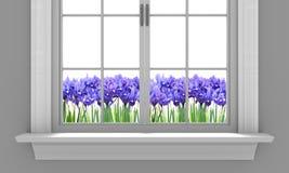 Beautiful spring irises flowering outside a house window Stock Image