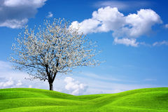 Beautiful spring landscape Stock Photo