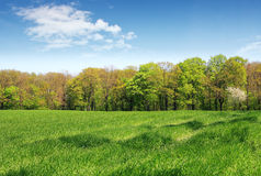 beautiful spring landscape Stock Photography