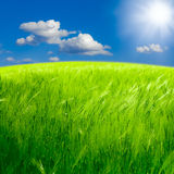 Beautiful spring landscape Stock Image
