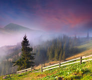 Beautiful spring landscape Stock Photos