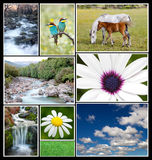 Beautiful spring landscape collage Stock Photo