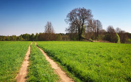 Beautiful spring landscape with field, road and trees Royalty Free Stock Image