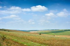 Beautiful spring landscape, green field and bright cloudy sky Stock Photo
