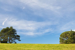 Beautiful spring landscape green meadow trees and blue sky background Royalty Free Stock Photography