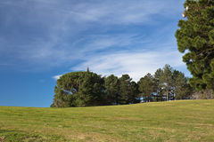 Beautiful spring landscape green meadow trees and blue sky background Royalty Free Stock Photos
