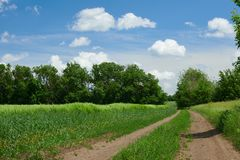Beautiful spring landscape - Ground road in the wheaten field and cloudy sky stock photos