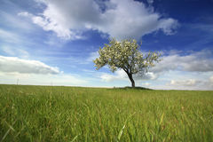 Beautiful spring landscape with lonely tree Royalty Free Stock Photo