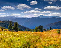 Beautiful spring landscape in a mountains Stock Photography