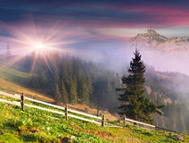 Beautiful spring landscape in the mountains. Stock Images