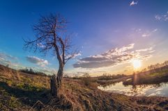 Beautiful spring landscape of the river bank at sunset with the sun over the horizon royalty free stock image