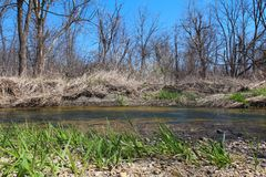 Beautiful spring landscape on the river. With blue sky and fresh green grass Stock Images