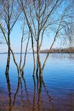Beautiful spring landscape. Trees are in the water because stock photos