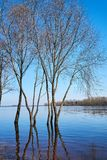 Beautiful spring landscape. Trees are in the water royalty free stock photo