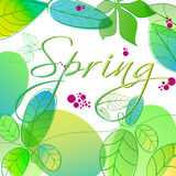 Beautiful spring leaves Royalty Free Stock Photography