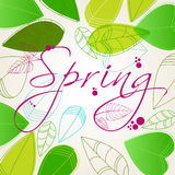 Beautiful spring leaves Royalty Free Stock Images