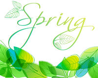 Beautiful spring leaves Royalty Free Stock Photos