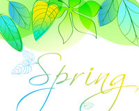 Beautiful spring leaves Stock Photography