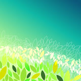 Beautiful spring leaves Stock Photos