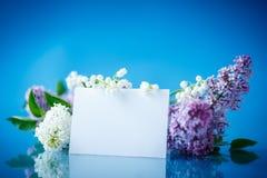 Beautiful spring lilac Stock Photos