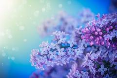 Beautiful spring lilac Royalty Free Stock Photos