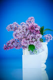 Beautiful spring lilac Stock Photography