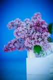 Beautiful spring lilac Royalty Free Stock Photos