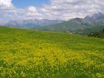 Beautiful spring meadow Stock Image