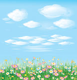 Beautiful spring meadow,  Stock Images