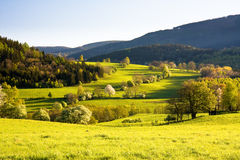 Beautiful spring meadow Stock Photo