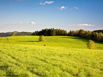 Beautiful spring meadow Royalty Free Stock Image