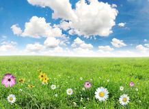 Beautiful spring meadow. Royalty Free Stock Photography