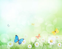 Beautiful spring meadow Stock Photography