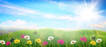 Beautiful spring meadow colorful flowers Stock Photo