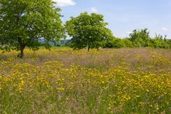 Beautiful spring meadow flowers on blue sky sunny day. Wide view on beautiful spring meadow flowers on blue sky sunny day in south germany stock photography