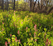Spring Meadow Background Stock Images