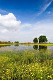 Beautiful spring meadow Royalty Free Stock Images