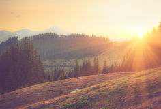 Beautiful spring mountain landscape at sunrise. Stock Images