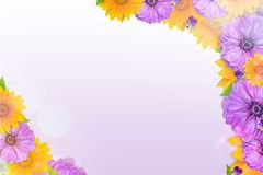 Beautiful spring nature background with blossom, petal and bokeh on purple background. Frame from flowers. Frame from flowers. Beautiful spring nature background royalty free stock images