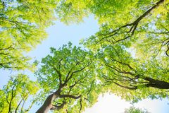 Green forest landscape Royalty Free Stock Photography