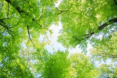 Green forest landscape Royalty Free Stock Image
