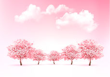 Beautiful spring nature background with trees. Royalty Free Stock Photos